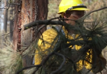 23rd BEB Soldiers conduct forest recovery