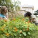Charity receives bumper crop of aid from Arlington House garden