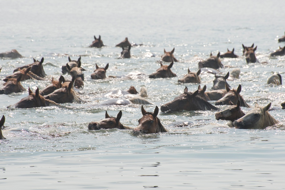 Coast Guard Station Chincoteague helps ensure safe 91st Annual Pony Swim