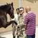 Soldiers help nurture horses to health