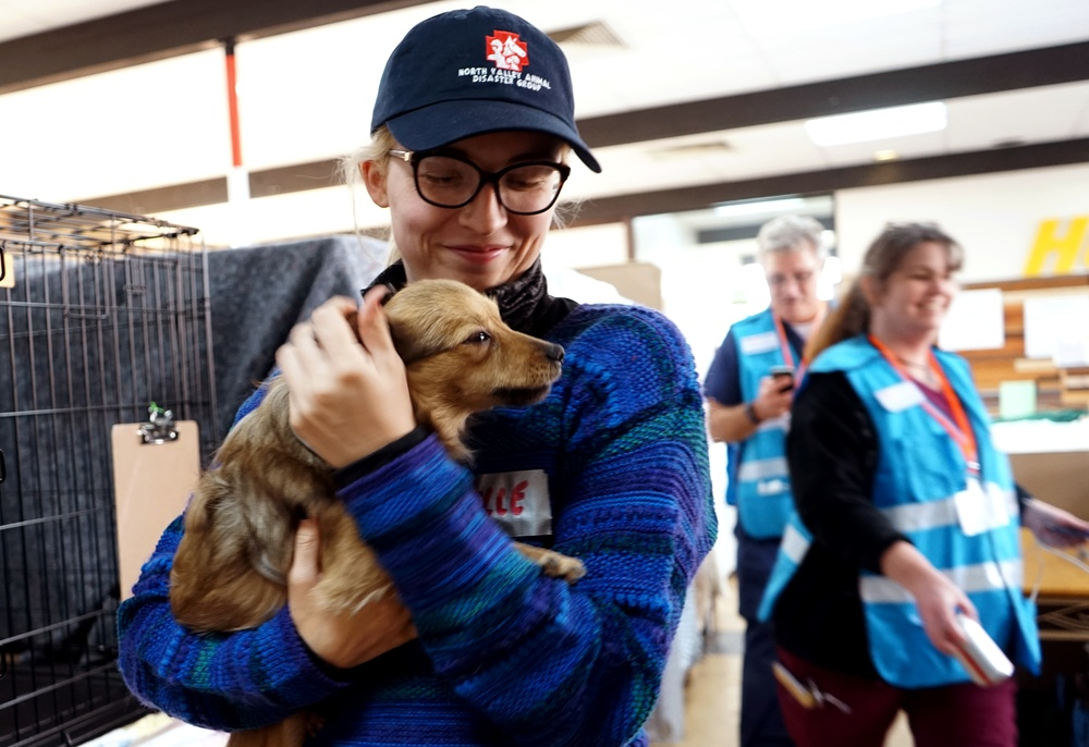 Paradise pets find sanctuary in airport shelter