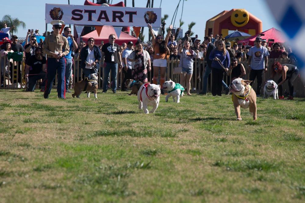 Santa Anita Park Inaurgural Bulldog Derby