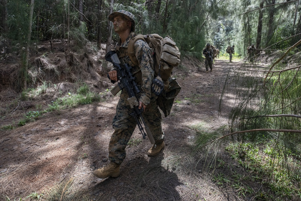 Exercise Bougainville I: An Echo in the Jungle