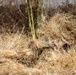 Hide and Seek: Marines with Scout Snipers Course participate in stalking exercise