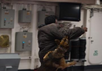 31st MEU military working dog demonstrates skills at sea