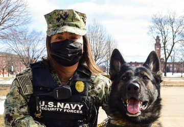 Part of the Pack: Training NSGL's Military Working Dogs