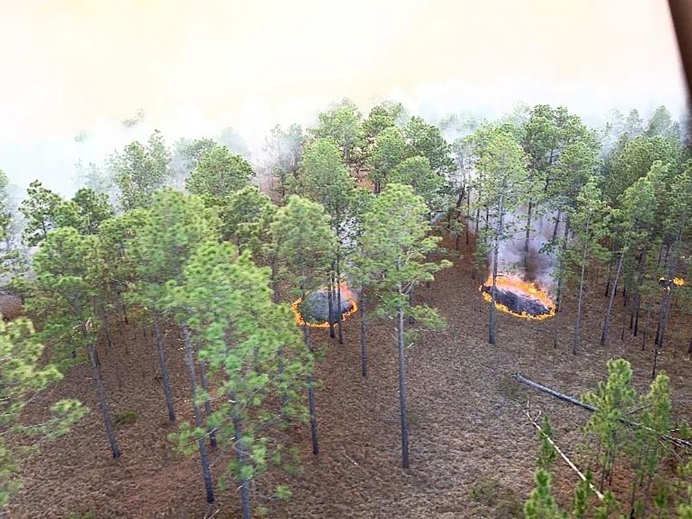 JRTC, Fort Polk sets DoD, Army standard for environmental efforts