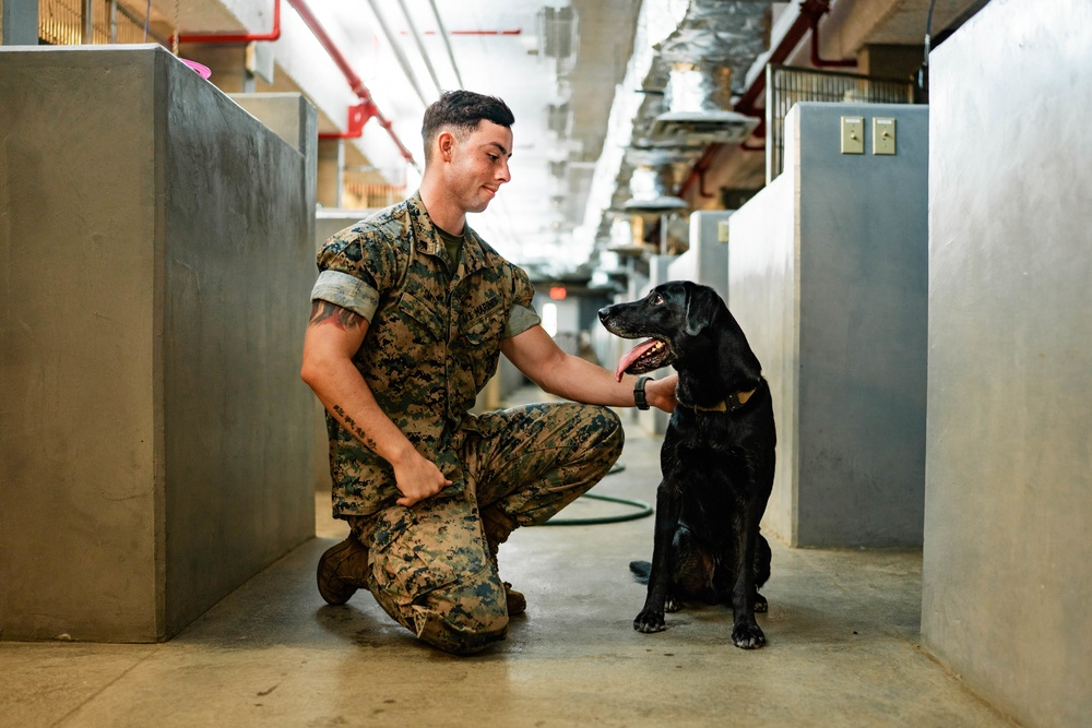 War Dogs' New Chapter