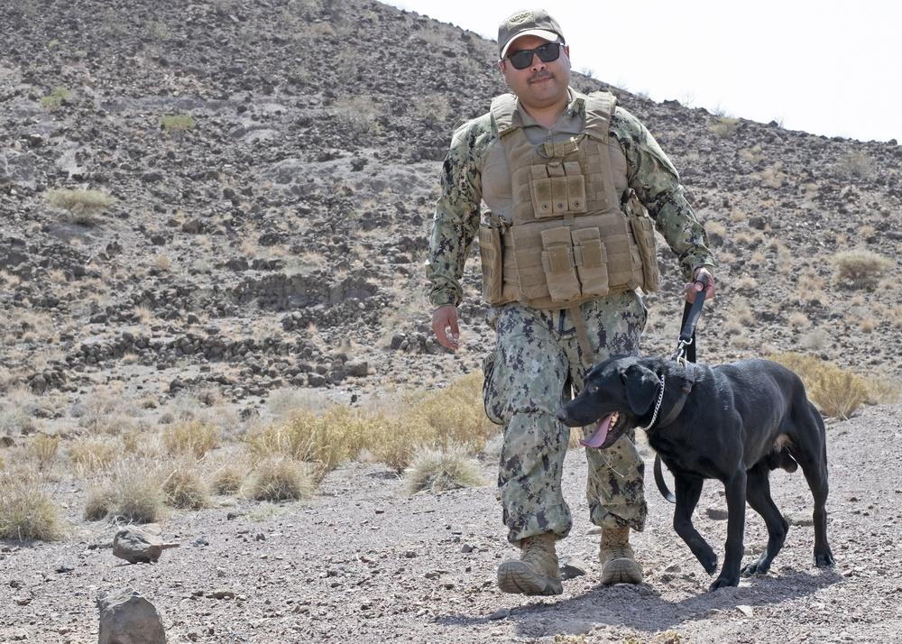 Military Working Dog Training